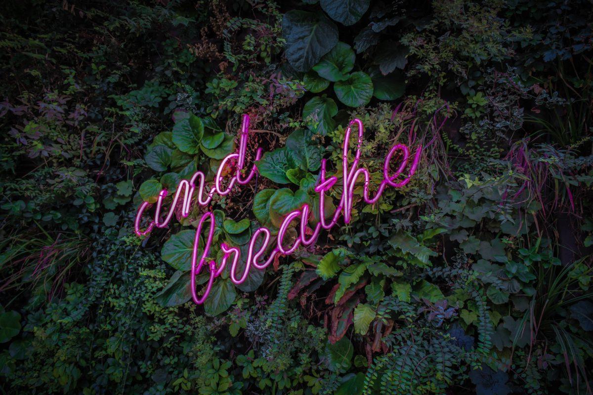 meditate and breathe